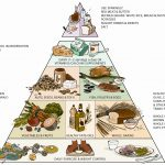 Food Network Pyramid