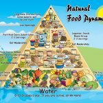 Natural Food Pyramid