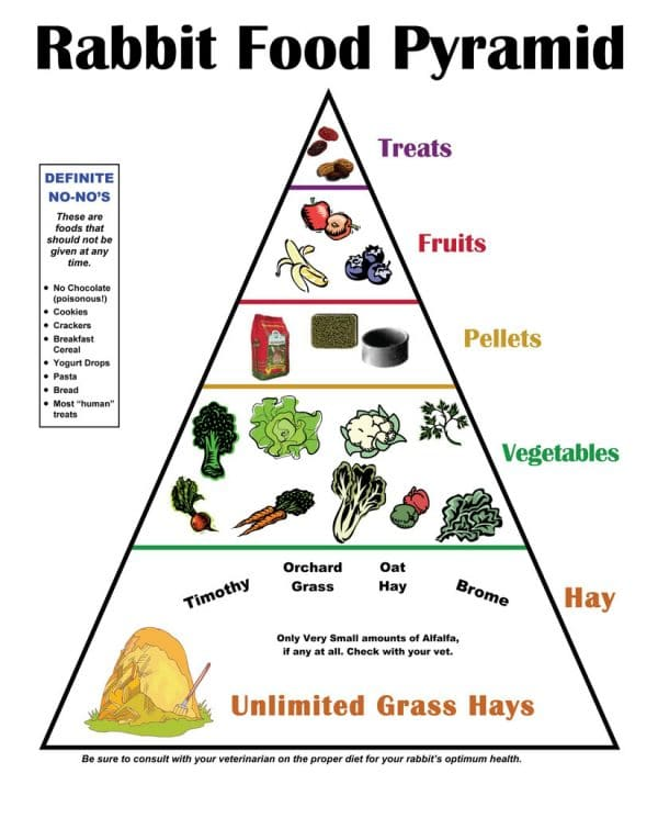 Rabbit Food Pyramid